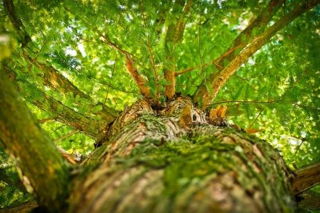 tree-1750784_1280